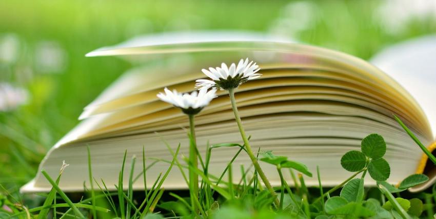 La Educación Ambiental como herramienta clave de transformación