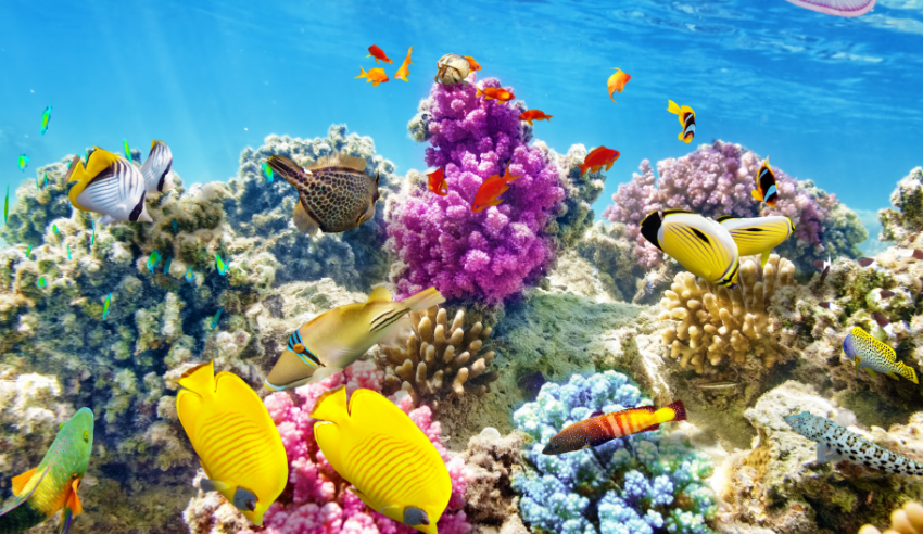 """Turismo mundial: """"Hay que reducir las emisiones de carbono"""""""