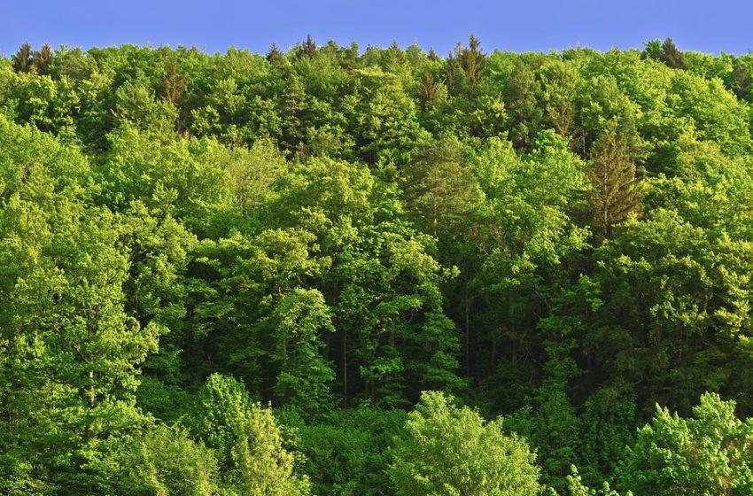 Todos los días el día de los bosques