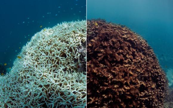 """Las """"Selvas de Mar"""": entre la agonía y la supervivencia"""