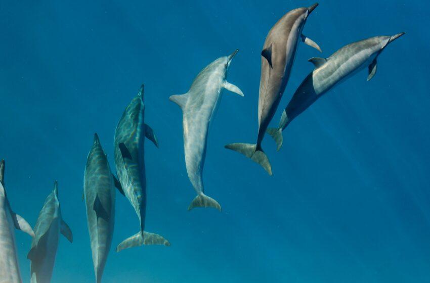 La hora de los Delfines