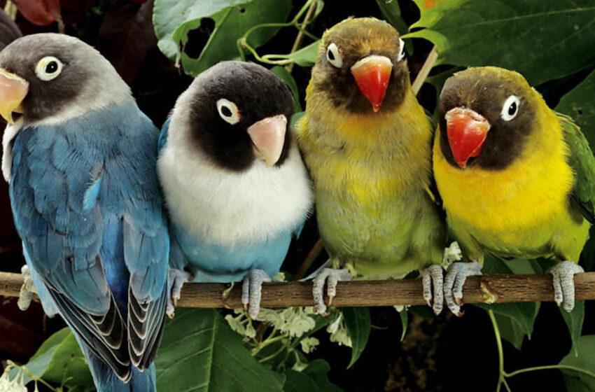 Celebración del Día Mundial de la Vida Silvestre
